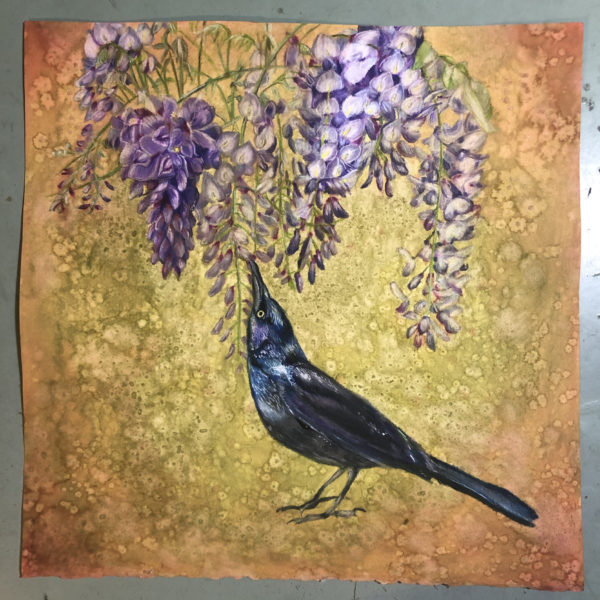 Grackle with Wisteria